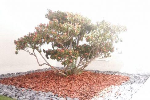 Venta casa 4 recamaras una en PB Parque Nuevo Leon Lomas de Angelopolis cochera 3 autos techada y roof garden 7